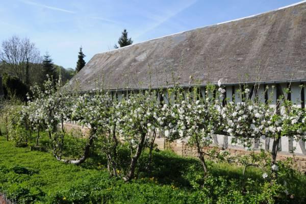 abbaye du bec hellouin fruitiers