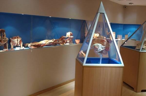 musee-anatomie-011